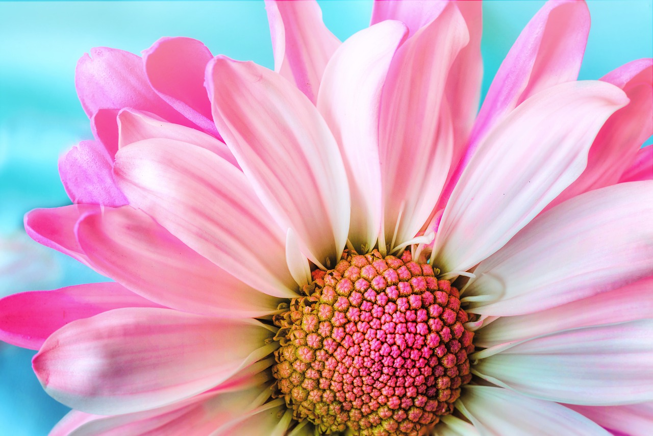 flower-3140492_1280